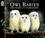 Owl Babies softcover book