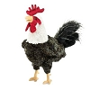 Rooster Hand Puppet black and white by Folkmanis