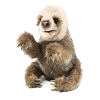 Baby Sloth Puppet by Folkmanis Puppets 2927