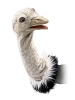 Ostrich Stage Bird Puppet by Folkmanis